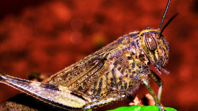 חרק אמיתי